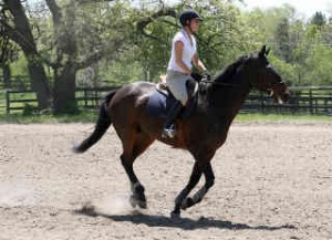 Photo of horse rider