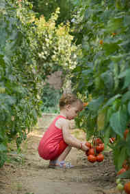 Image of young girl squatting to pick fruit